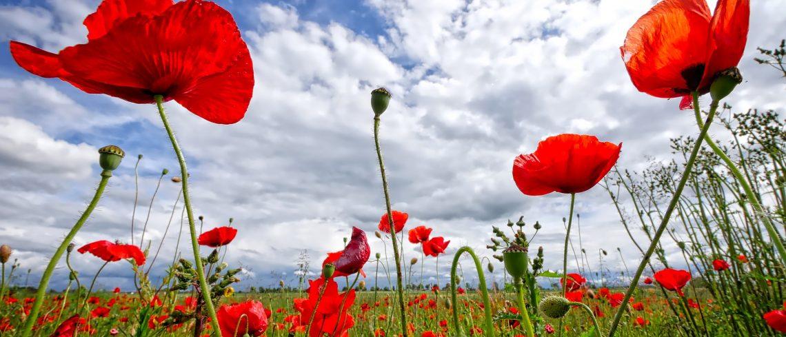 Seis explosiones florales de lo más artístico